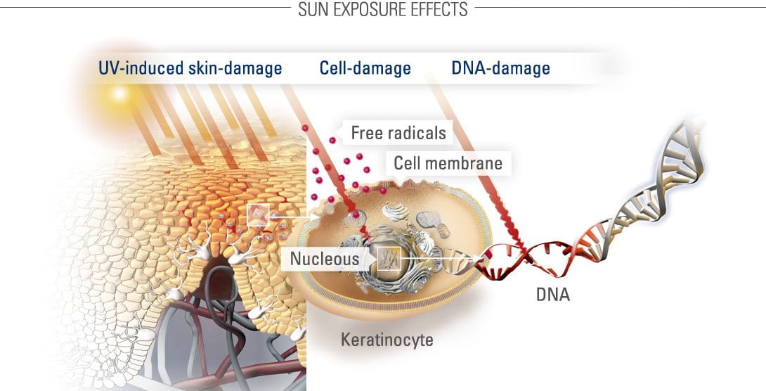 Graphic illustration of sun protection and DNA repair