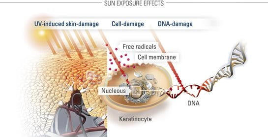 the effects of sun exposure to The harmful effects from exposure to ultraviolet (uv) radiation can be classified as acute or chronic the acute effects of uv-a and uv-b exposure are both short.