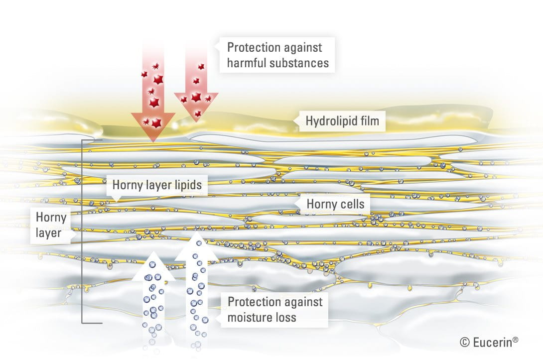 Basic Skin Knowledge Skin Has Many Layers How Do They Form And