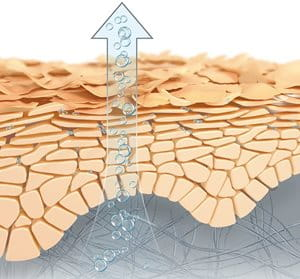 Illustration of Natural Moisturising Factors evaporating out through the skin