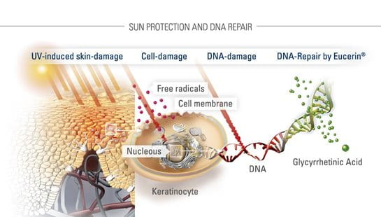 Illustration of sun protection and DNA