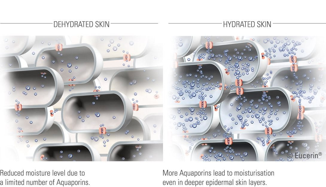 Illustrations of hydrated and dehydrated skin