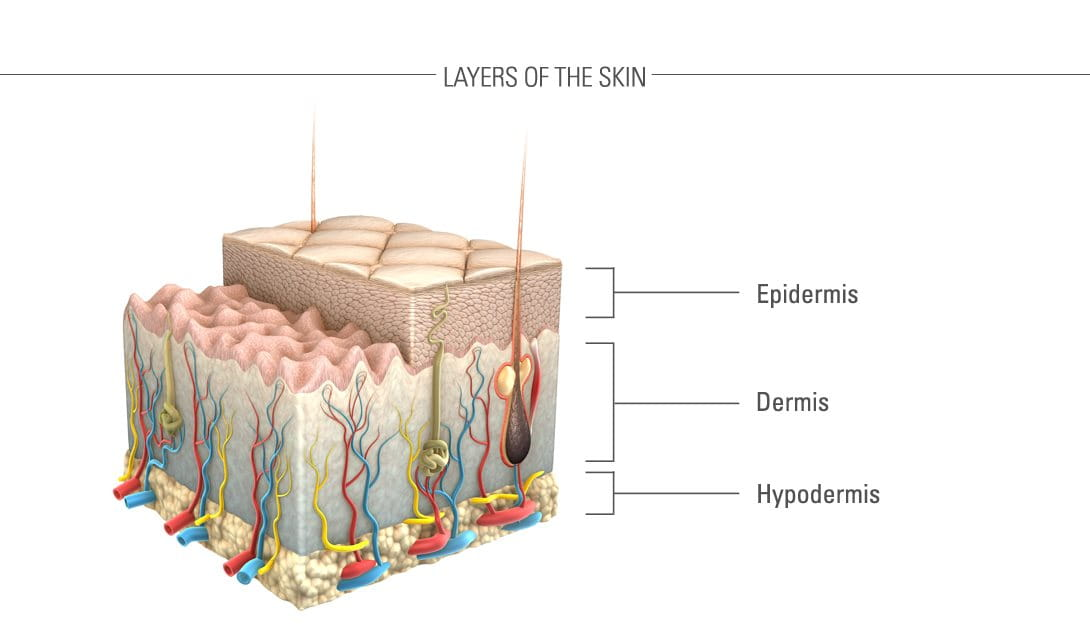 Illustration of skin and its layers