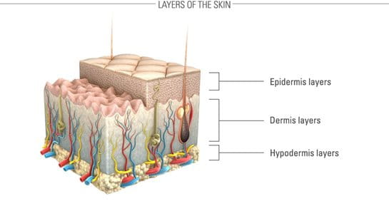 Graphic presentation of the skin and its layers.