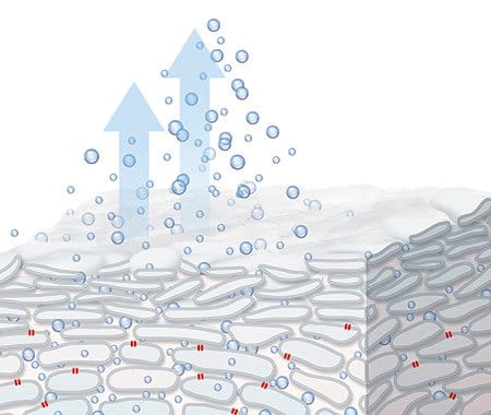 Diagram showing water evaporating from a cross section of skin